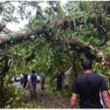 Update on newsflash 11-27-2016.  First report about affected farms by Hurricane Otto